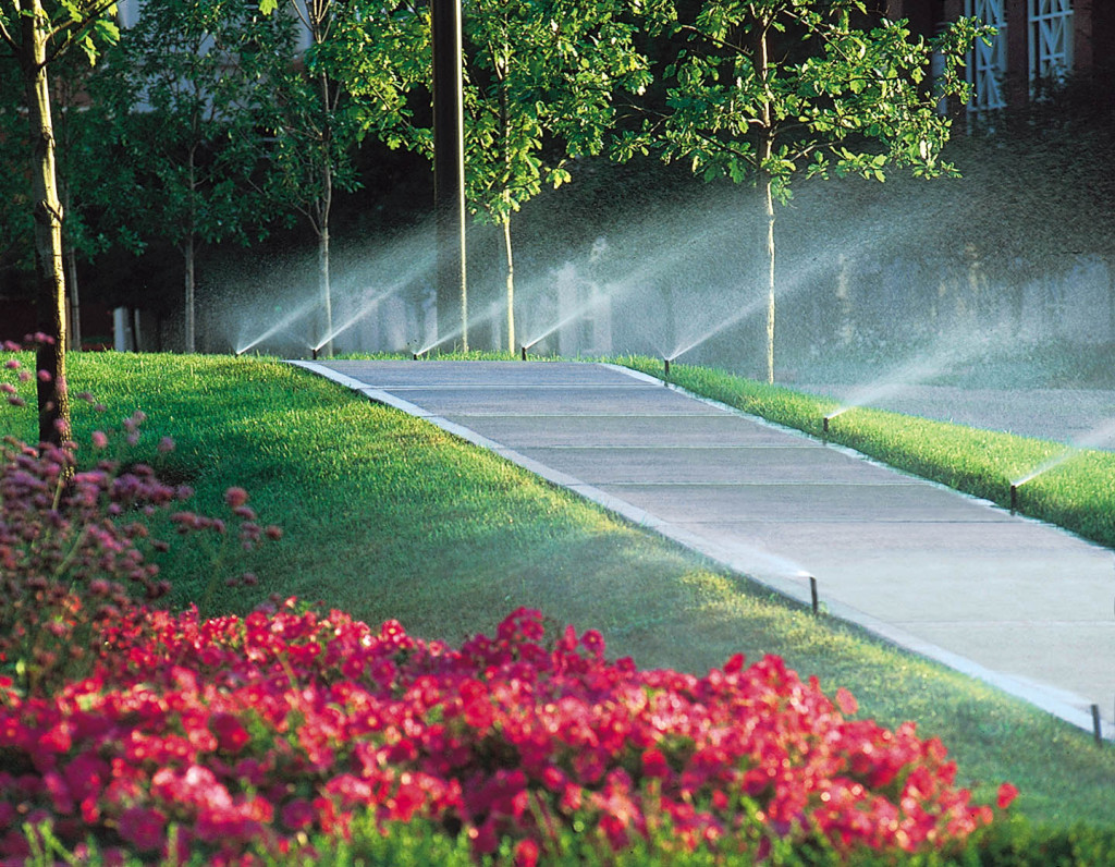 Rainbird Sprinkler Picture